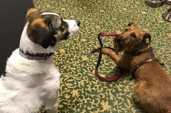 Hunde im Landhotel Baumwipfel