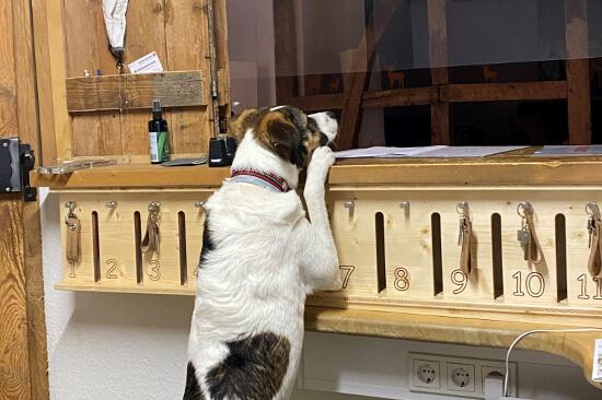 Hund an der Rezeption im Landhotel Baumwipfel